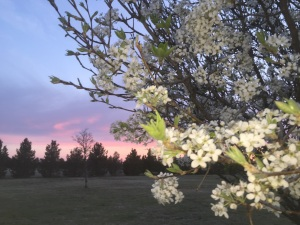 March 3 sunsets and pearls 020